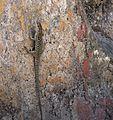 Herculaneum 70 (14916150251).jpg