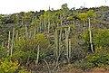 Hierve el Agua, plantas 4.jpg
