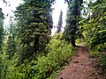Hiking track from Thandiani to Nathia Gali (20180513).jpg