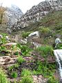 Hiking trail going up Table Mountain.jpg