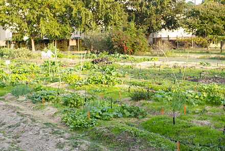 Hill Farm Community Garden Hill Farm Plots.jpg