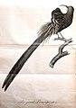 Histoire naturelle et générale des colibris, oiseaux-mouches, jacamars et promerops (Pl. 8) (8597959504).jpg