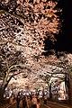Hitachi Sakura Festival, Ibaraki 31.jpg
