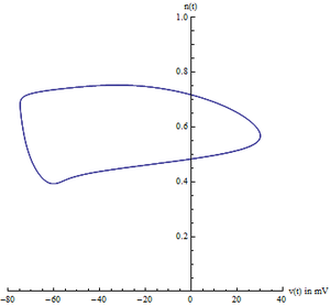 Hodgkin–Huxley model - A simulation of the Hodgkin–Huxley model in phase space, in terms of voltage v(t) and potassium gating variable n(t). The closed curve is known as a limit cycle.