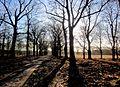 Hoge Veluwe, Houtkampweg. Gelderland, Netherlands. - panoramio.jpg