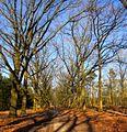 Hoge Veluwe, Houtkampweg. Gelderland, Netherlands. - panoramio (1).jpg