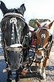 Horse carriage, Quebec City, Canada.jpg