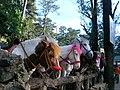 Horses for rent1.jpg