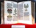 Hortus sanitatis 1497.jpg