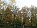House for sale and fall foliage in Hollin Hills.jpg