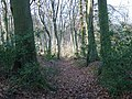 Howe Wood - geograph.org.uk - 115080.jpg