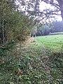 Hraniční přechod Fleky - Hofberg - panoramio (6).jpg
