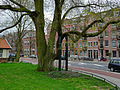 Huge city-tree in Amsterdam East.jpg