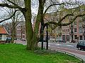 Huge city-tree in Amsterdam East.jpg