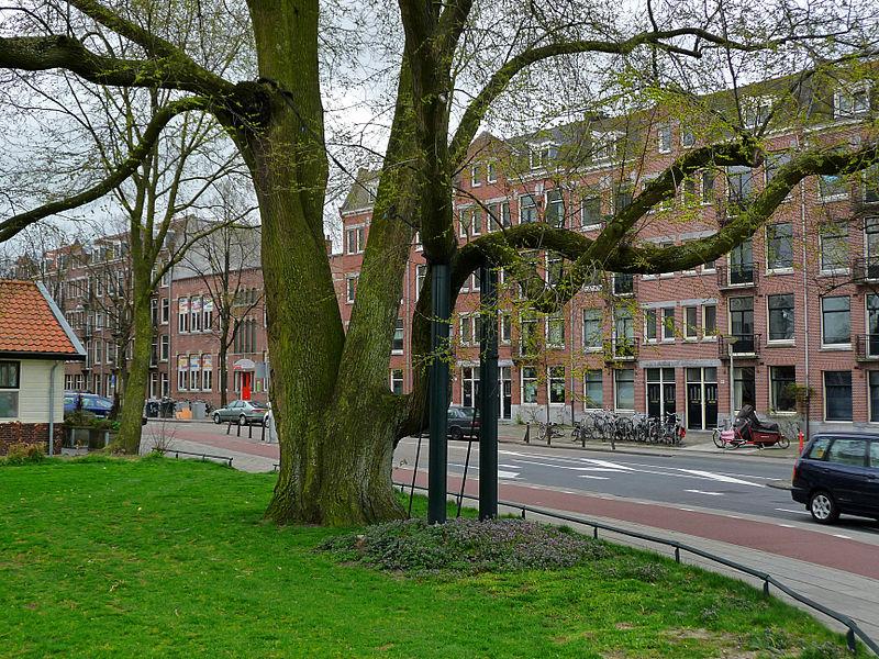 Власти Амстердама предложили в честь рождения каждого ребенка посадить дерево