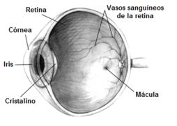 ¿Qué aspecto tiene una infección de los conductos oculares?