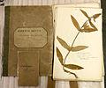 Ick's herbarium.jpg