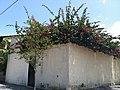 Iguape - SP - panoramio (206).jpg