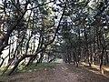 Imazu Pine Grove 13.jpg