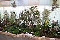Internationale Orchideen- und Tillandsienschau Blumengärten Hirschstetten 2016 e.jpg