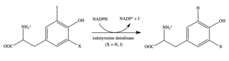 Iodotyrosine deiodinase - Image: Iodotyrosine deiodinase reaction 2