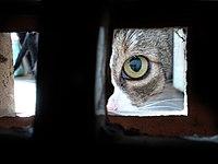 Koronavírus macska - Terjedése, tünetei és kezelése | Zooplus Magazin