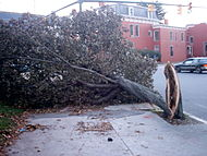 Isabel RVA tree split.jpg