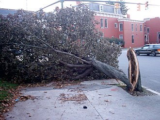 Effects of Hurricane Isabel in Virginia - Downed tree in Richmond