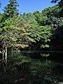 Izuruhara Benten Pond 1.jpg