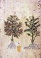 Japanese Herbal, 17th century Wellcome L0030049.jpg