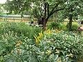 Jardín lateral de una casa de campo rusa.jpg
