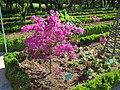 Jardin botanique Dijon 027.jpg