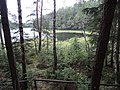 Jezioro Duży Sucharek - panoramio (47).jpg