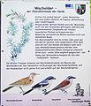 Juniperus-comm-panel-DE-2428.jpg
