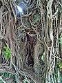 Kam Tin Tree House - 2007-09-30 13h59m06s SN200786.jpg