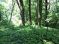 Kaniv Nature Reserve (May 2018) 03.jpg
