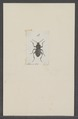 Kend - Print - Iconographia Zoologica - Special Collections University of Amsterdam - UBAINV0274 027 23 0002.tif