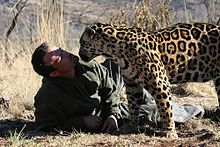 Kevin Richardson next to a jaguar.jpg