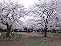 Kiba park , Koto ward - panoramio (2).jpg