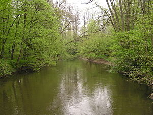 Kinzig (Main) - Kinzig in the Bulau near Hanau