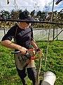 Kiwifruit vine grafting 13.jpg