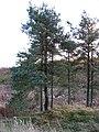 Knoll and marsh, Bellendean - geograph.org.uk - 277739.jpg