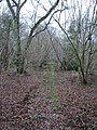 Knowle's Wood - geograph.org.uk - 662156.jpg