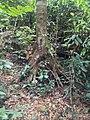 Ko Chang, Ko Chang District, Trat, Thailand - panoramio (32).jpg