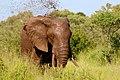 Kruger National Park, South Africa (Unsplash iBO2m ZWpeo).jpg