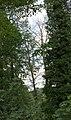 KulTour Parkanlage Sanssouci Baumschäden-3321.jpg