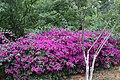 Kunming City Zoo Flowers (9964797943).jpg