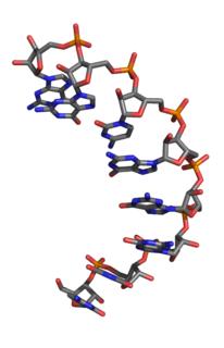 <small>L</small>-Ribonucleic acid aptamer RNA-like molecule