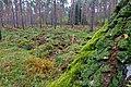 LSG Forst Rundshorn IMG 3079.jpg