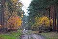 LSG Forst Rundshorn IMG 3705.jpg